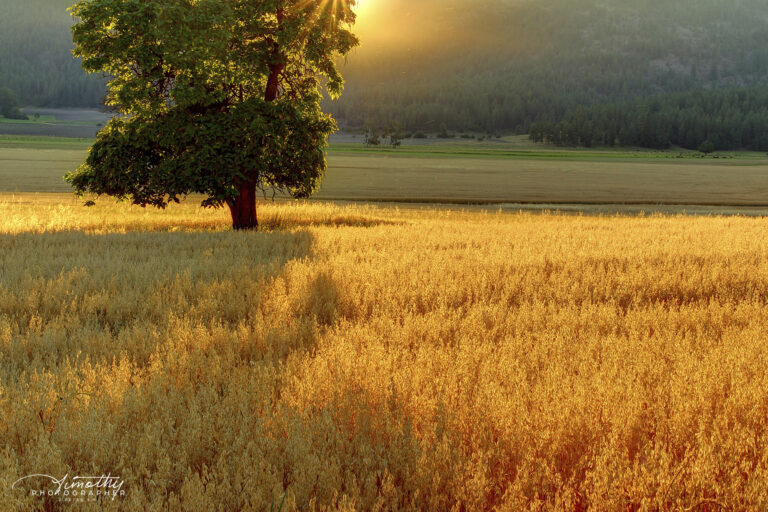Summer Sun sets over fields of gold