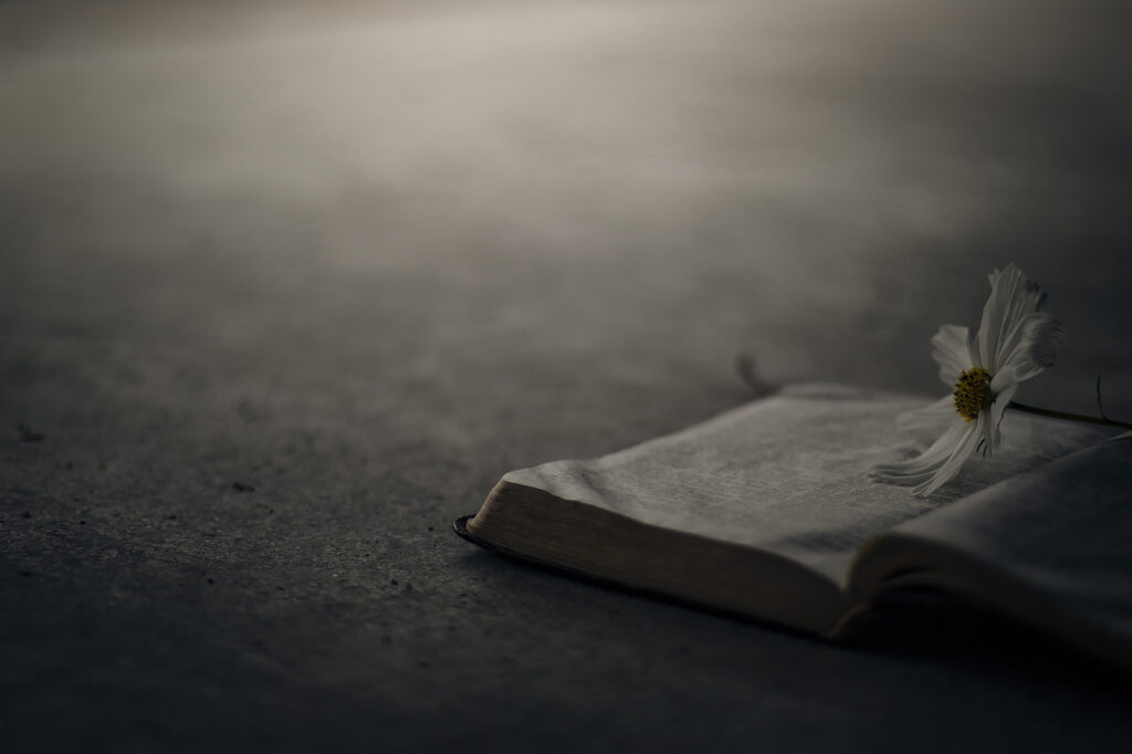 Delicate image of the bible with a flower on it