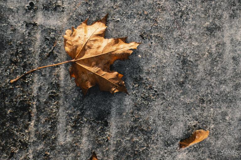 fall leaf on ice