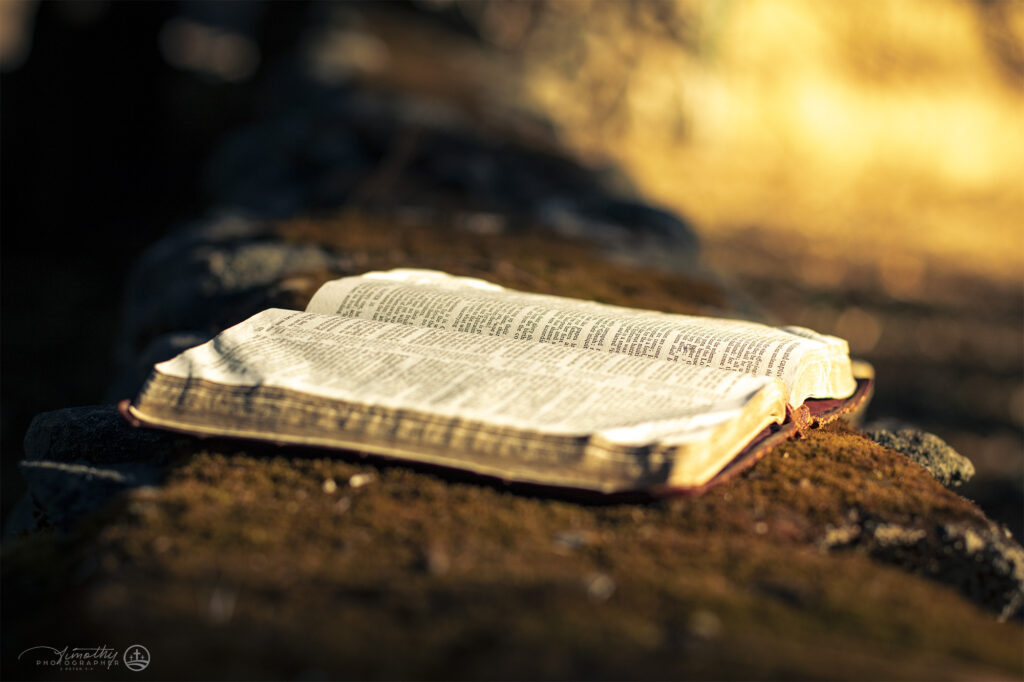 bible sitting on moss covered wall